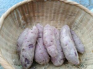 【ふるさと納税】五島列島直送 無農薬 こだわりの紫芋