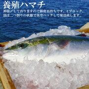 【ふるさと納税】橘湾産養殖ハマチ1本4kg(片身2kg)