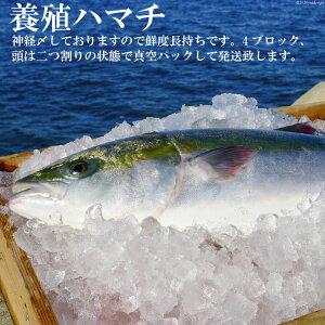 【ふるさと納税】橘湾産養殖ハマチ 1本4kg(片身2kg)