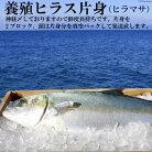 【ふるさと納税】橘湾産養殖ヒラス(ヒラマサ)片身2kg