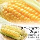 【ふるさと納税】スイートコーン3kg以上新鮮そのまま収穫当日発送