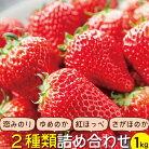 【ふるさと納税】長崎県産旬のいちご250g×4パック