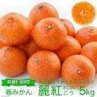 【ふるさと納税】希少品種『麗紅(れいこう)』5キロ(柑橘みかん)〜豊富でジューシー!クセになる味わい〜