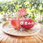 【ふるさと納税】雲仙いちごの赤桃セット「恋みのり」「雲仙の花ぼうろ」4パック【11月下旬頃より順次発送】