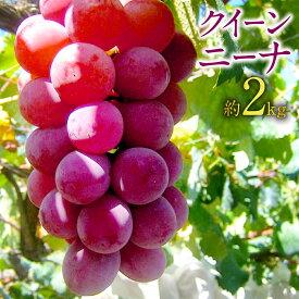 【ふるさと納税】クイーンニーナ 約2kg 葡萄 ブドウ ぶどう フルーツ 果物 果実 ギフト 送料無料