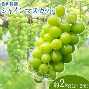 【ふるさと納税】【先行予約】鶴田農園 シャインマスカット 約2kg (2〜3房) 熊本県荒尾市《8月中旬-9月下旬頃より順次出荷》