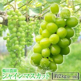 【ふるさと納税】荒尾市 鶴田農園のシャインマスカット 約2kg (2〜4房) フルーツ 果物 新鮮 《8月中旬-9月下旬頃より順次出荷》