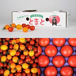【ふるさと納税】蘇鉄園芸のトマト三昧 (ミニトマト2kg + 桃太郎トマト14個)