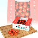 【ふるさと納税】坂本農園 トマトベリー 3kg