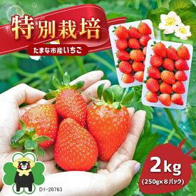 【ふるさと納税】特別栽培 いちご 2kg(250g×4パック)×2箱 熊本県