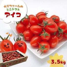 【ふるさと納税】『大家ファーム』のミニトマト アイコ 3.5kg 熊本県玉名<12月〜6月で発送>