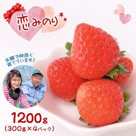 【ふるさと納税】熊本たまな産イチゴ「恋みのり」1,200g(300g×4パック)<2021年1月から発送>