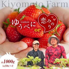 【ふるさと納税】熊本たまな産イチゴ1,200g(300g×4パック)<12月下旬から発送>