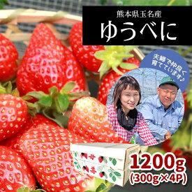 【ふるさと納税】熊本たまな産イチゴ ゆうべに (300g×4パック)<2021年1月中旬から発送>