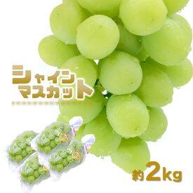 【ふるさと納税】シャインマスカット 4房 (2.0kg超) 熊本玉名