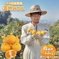 【ふるさと納税】ノナカ柑橘農園の【ご家庭用訳あり】温州みかん12kg熊本玉名の高地で実りました!<10月以降発送>