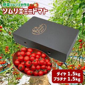 【ふるさと納税】G4 ソムリエミニトマト 食べ比べ3kg (プラチナ+ダイヤ)≪12月中旬より発送スタート≫