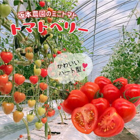 【ふるさと納税】坂本農園のミニトマト・トマトベリー(3kg)<12月〜6月で発送>