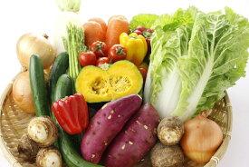【ふるさと納税】旬の野菜便(定期便) 野菜10〜12品×3回発送 【養生市場】
