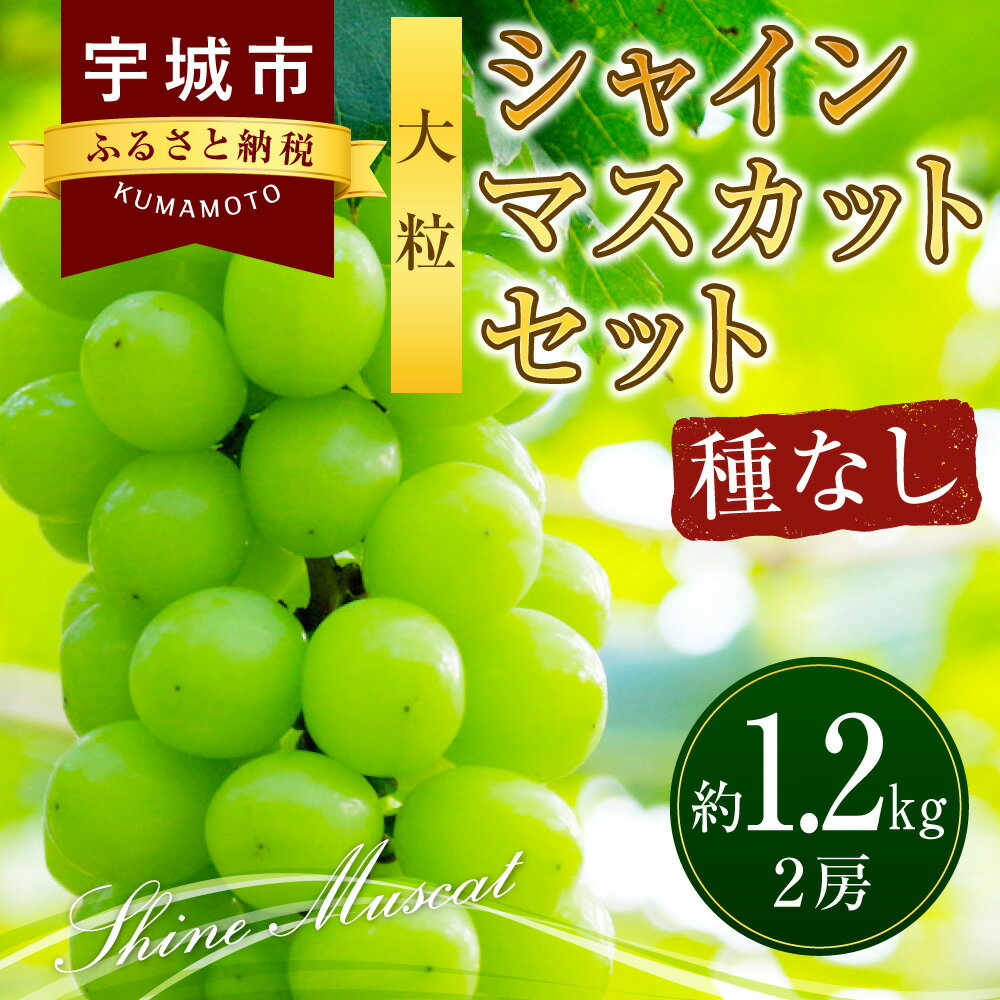 【ふるさと納税】大粒シャインマスカットセット 2房 約1.2kg ぶどう ブドウ 葡萄 種無し ギフト 送料無料