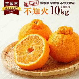 【ふるさと納税】まんぷく不知火(ご家庭用) 約10kg 熊本県産 ご家庭用 みかん フルーツ 柑橘 デコポンと同品種 訳あり 送料無料