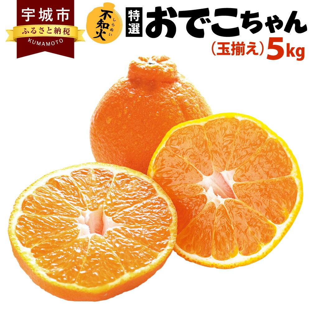 【ふるさと納税】特選 おでこちゃん 玉揃え 5kg 不知火 みかん 柑橘 フルーツ 果物 九州産 熊本県産 送料無料