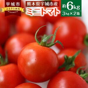 【ふるさと納税】ミニトマト 約6kg トマト プチトマト とまと 野菜 国産 九州産 熊本産 送料無料