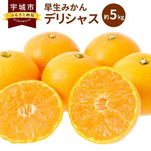 【ふるさと納税】早生みかん デリシャス 約5kg 柑橘 ミカン 果物 フルーツ 熊本