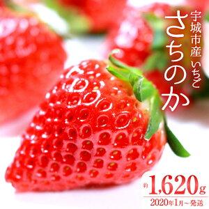 【ふるさと納税】宇城市産いちご 「さちのか」 270g×6パック 合計1620g 苺 イチゴ 果物 くだもの フルーツ 国産 九州産 熊本産 冷蔵 送料無料