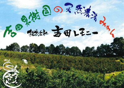 【ふるさと納税】食べるレモンスイートレモネード2kg九州産熊本県産レモンフルーツ果物ビタミン柑橘送料無料