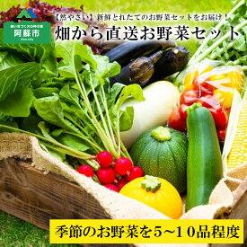 【ふるさと納税】阿蘇の高原 旬 季節のお野菜セット 減農薬 無農薬 Mサイズ 産地直送