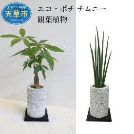 【ふるさと納税】エコ・ポチ チムニー 観葉植物