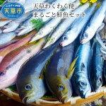 【ふるさと納税】天草わくわく便まるごと鮮魚セット