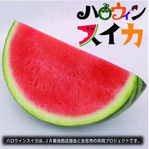 【ふるさと納税】ハロウィンスイカ1玉入(品種:ひときわ 1玉5〜6kg)