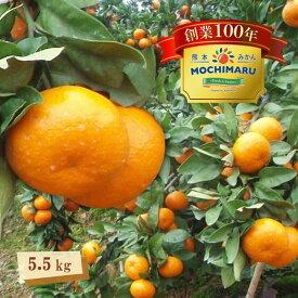 【ふるさと納税】創業100年 甘さ際立つ!熊本温州みかん【5.5kg】