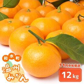 【ふるさと納税】温州みかん 熊本和水町 11月発送 【12kg】