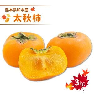 【ふるさと納税】熊本和水産 太秋柿 【3kg】