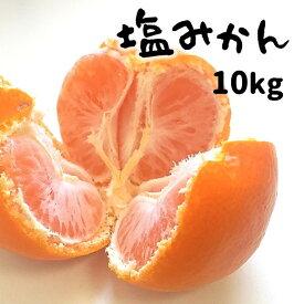 【ふるさと納税】塩みかん 熊本和水町 【10kg】