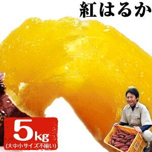 【ふるさと納税】熊本県大津町産 中無田農園の紅はるか 約5kg(大中小サイズ不揃い) 熊本県大津町 《5月中旬-6月中旬頃より順次出荷》 さつまいも 芋 スイートポテト 干し芋にも 名産地 特産