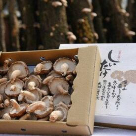 【阿蘇南小国産】極上の香りを放つ希少な原木しいたけ(1kg)