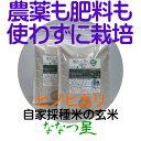 【ふるさと納税】【令和元年度産新米】ヒノヒカリ(ななつ星)玄米5kg生きもの育む田んぼのお米