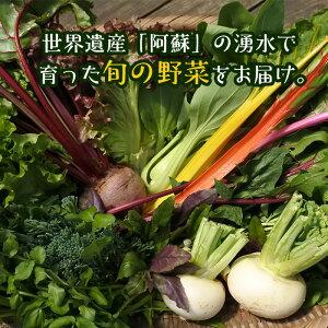 【ふるさと納税】「南阿蘇オーガニック」旬の野菜セット10種類以上詰め合わせ