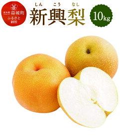 【ふるさと納税】新興梨 10kg しんこう なし 果物 くだもの フルーツ 果実 九州産 国産 熊本県産 送料無料 冷蔵