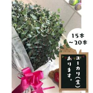 【ふるさと納税】ユーカリ(生)フラワーアレンジ