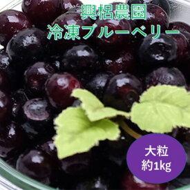 【ふるさと納税】熊本県産 興梠農園 冷凍 ブルーベリー 大粒 約1kg(約500g×2)【配送不可:離島】 【果物詰合せ・フルーツ・冷凍ブルーベリー・大粒・約1kg】