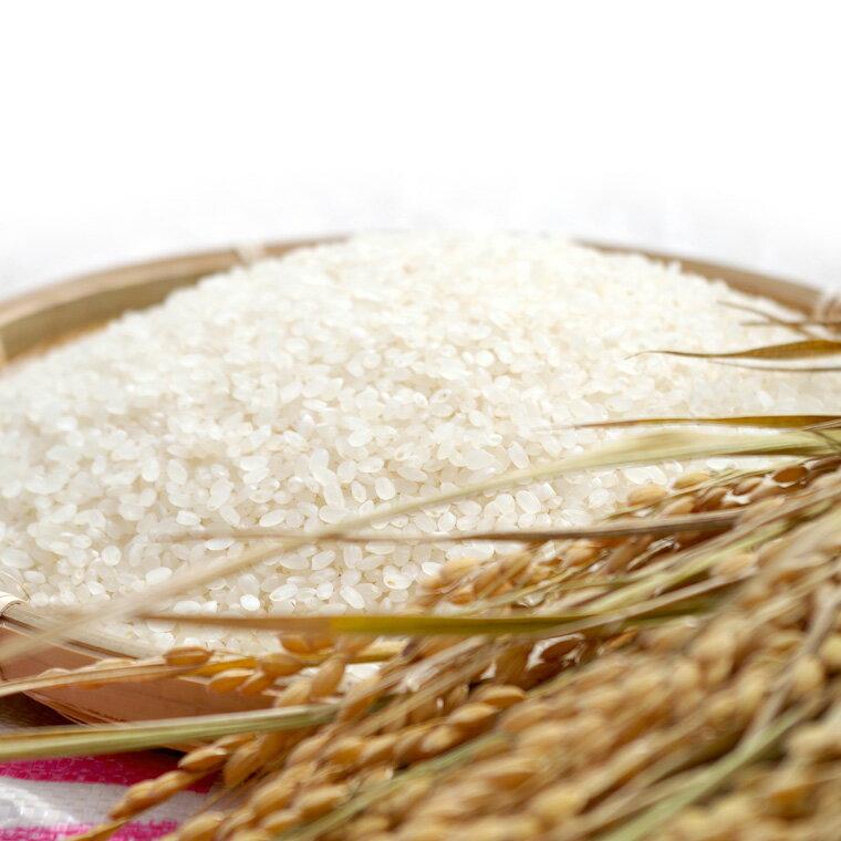 【ふるさと納税】島木かぐや米 ヒノヒカリ 5kg