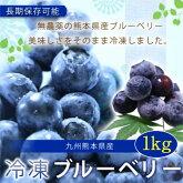 【ふるさと納税】熊本産冷凍ブルーベリー1キロ