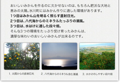 【ふるさと納税】晩白柚2L(2玉入)熊本県氷川町産晩白柚柑橘《12月上旬〜3月末頃より順次出荷》
