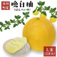【ふるさと納税】晩白柚(L玉)2玉熊本県氷川町産晩白柚柑橘《12月上旬〜3月末頃より順次出荷》