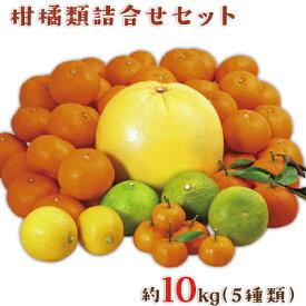 【ふるさと納税】柑橘詰合せセット たっぷり約10kg 立神峡里地公園 熊本県氷川町産《12月上旬-1月上旬頃より順次出荷》